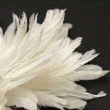 White Full Coque Feathers 18-20cm Long x 5cm